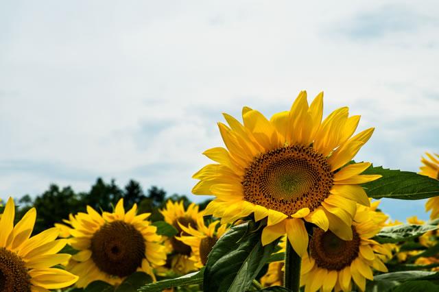 8月13日(火)?15日(木)の期間で夏期休暇を頂きます。